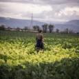 Rassegna stampa di Antonio Maria Mirail27 novembre 2013.Campania da/www.liberainformazione.org Un pezzo di soluzione è a portata di mano. Ad alcuni agricoltori andrebbe più che bene e se gli inquirenti non […]