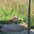 Afragola Na, 28 agosto 2015 – non ci sono segni di violenza Era adagiato su un fianco, sopra un cartone sistemato su un cumulo di immondiziaall'incrocio tra via Pelliccia e […]